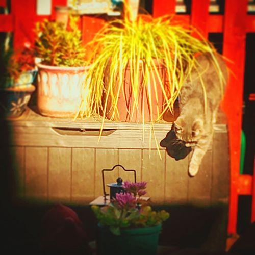 Garden Messedupjournal Kas© Muddakas Plant Cat Pussycat Spikey Plantpot Fence