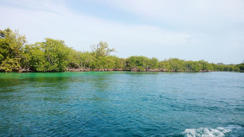 Mangrove Swamp Sky_collection Manglares Sky Beach From A Boat By The Beach Beachlife Exploring
