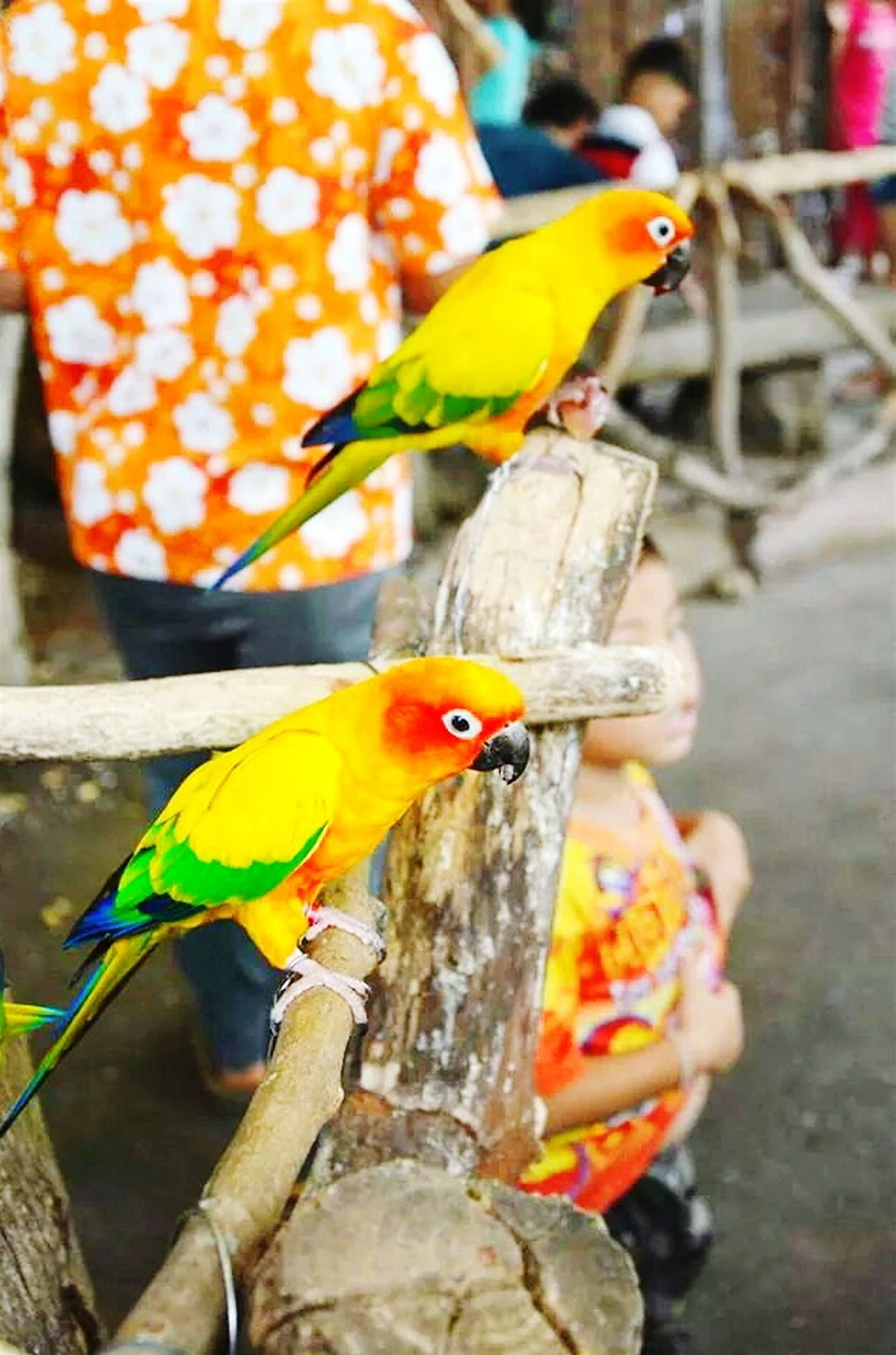 animal themes, animals in the wild, bird, one animal, perching, wildlife, focus on foreground, parrot, multi colored, yellow, close-up, branch, tree, nature, beak, day, outdoors, full length, no people, two animals