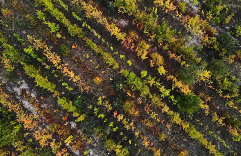 Drone  Autumn