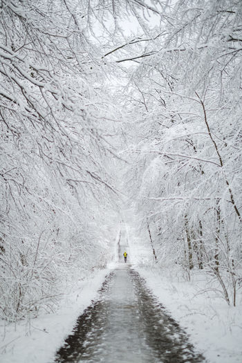Road amidst snow covered land and trees