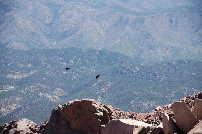 birds below the ridge Rockymountains Pikespeak Beauty In Nature Highaltitude Highaltitudephotography View From Above Geology Physical Geography Rugged Rocky Mountains Natural Landmark Rock Formation