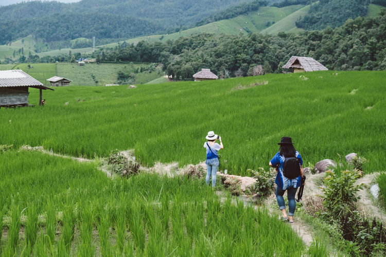 Agriculture Beauty In Nature Crop  Day Farm Farmer Field Full Length Grass Green Color Growth Landscape Men Mountain Nature Occupation Outdoors Real People Rear View Rice - Cereal Plant Rice Paddy Rural Scene Two People Walking Working