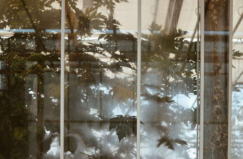 PalmHouse Slovenia Plants Palms Tropical Slowlife Slowliving Reflections Stillife Travel Tree Window Curtain Close-up