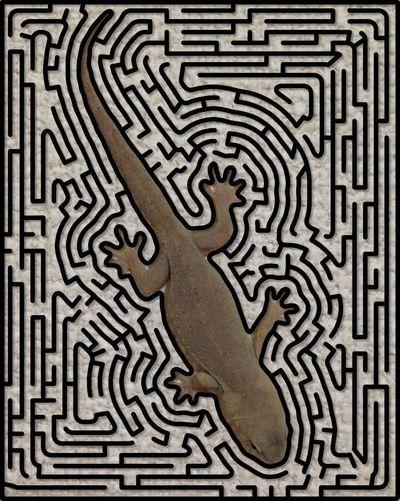 やもり Gecko Gekko 爬虫類 Reptile ニホンヤモリ 迷路 The Maze