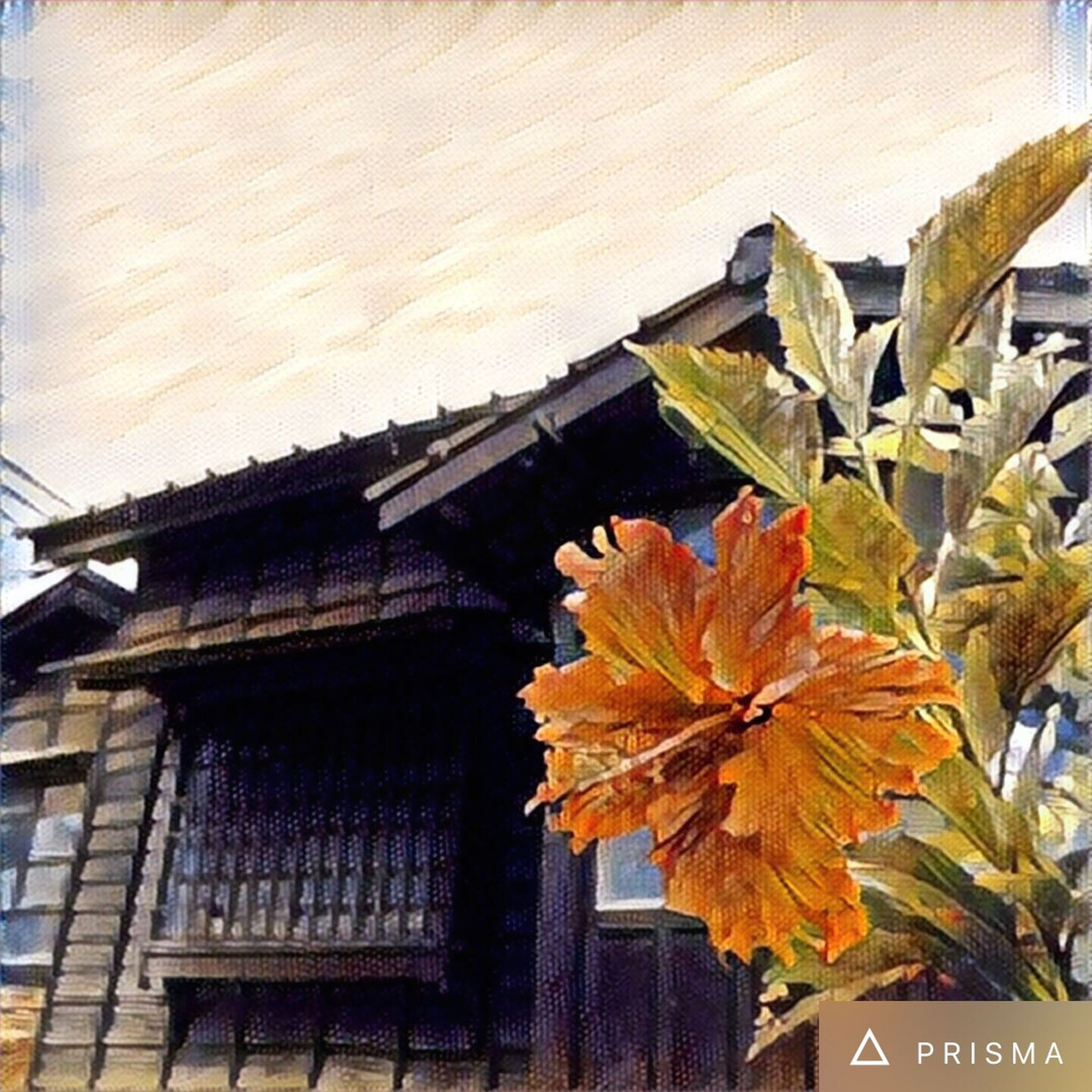 architecture, built structure, low angle view, leaf, orange color, outdoors, day, no people, change, plant, growth, nature, close-up, sky