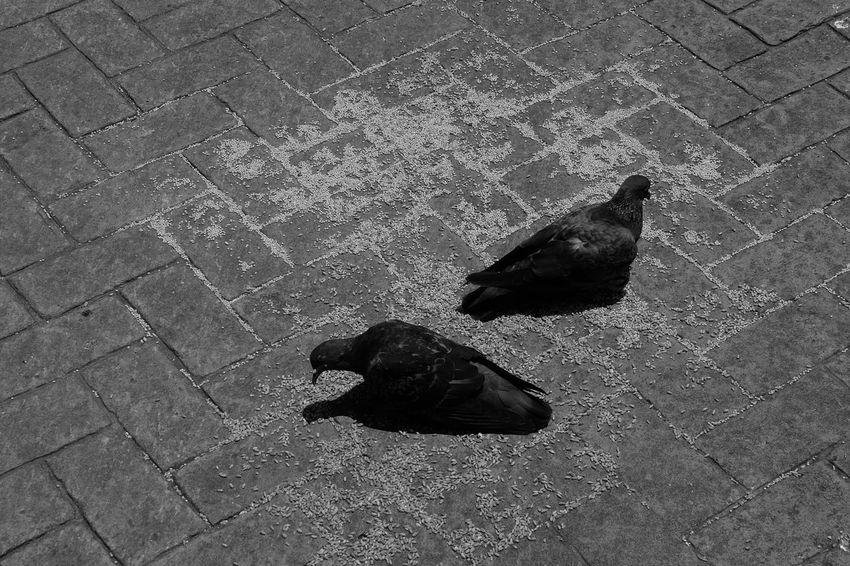Birds Animal Themes Blackandwhite Black & White Blackandwhite Photography Fujifilm_xseries Fujixa1 Fuji Monochrome Photography