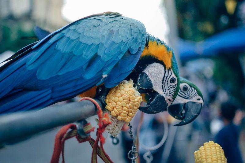 Close-up of a bird perching