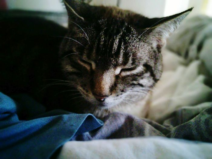 Helen takes a nap. Pets Cats