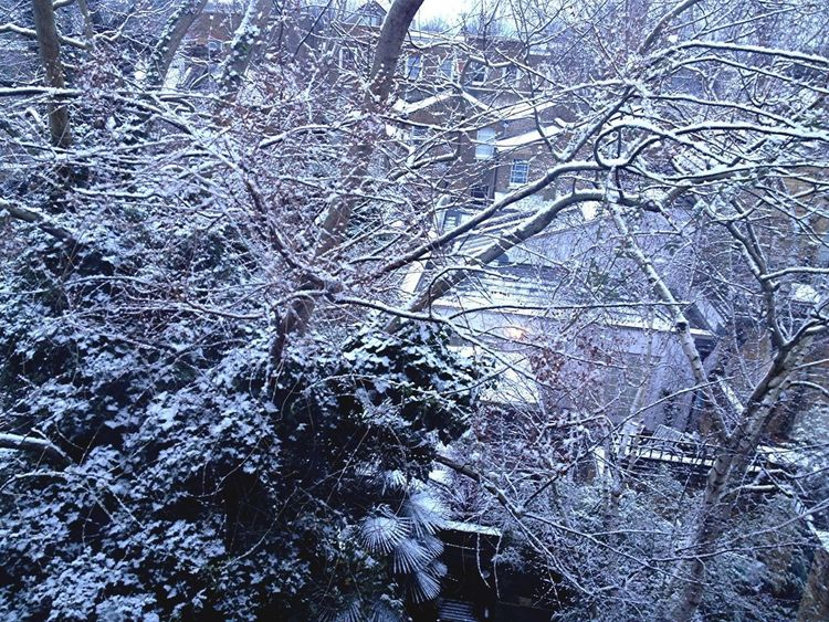Sight to behold from bathroom window this morning, winter beauty!! #Peckham #London #snow #trees #winter #wonderland #winterwonderland #white #branches #nature #beauty Urban Nature Winter Trees Eye4photography  Winter Wonderland No People Outdoors Tree_collection  Tree Snow Snow Covered Mothernature Mother Nature Winter Wintertime Winterscapes