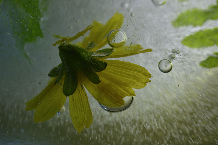 Frozen water, bubbles and plants freeze up. Frozen Ice Water Drops Background Beauty In Nature Bubble Close-up Day Drop Fragility Freeze Freshness Green Color High Angle View Lake Leaf Lily Pad Nature No People Outdoors Plant RainDrop Water Wet Zero Degrees