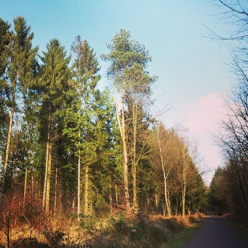 Springtime. #koenigsforst #koeln #cologne #wald #forest #wood #natur #nature #fruehling #spring Wood Nature Natur Wald Spring Cologne Forest Koeln Koenigsforst Fruehling