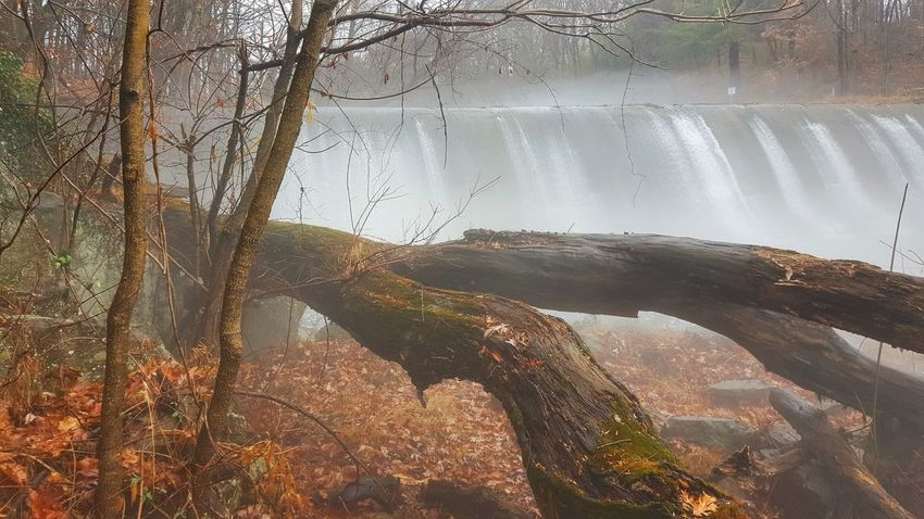 Tried to make this Burnt Mills Dam look good, lol. EyeEm Nature Lover Forest Photography Autumn Beauty In Nature Fog Tree Foggy Morning Nature Outdoors Water No People Waterfall Fine Art Photography Fine Art Finding New Frontiers Burnt Mills Dam Maryland Miles Away Silver Spring, Maryland, USA The Great Outdoors - 2017 EyeEm Awards