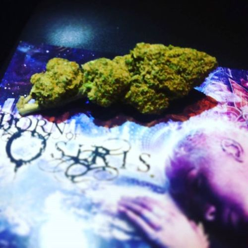 My late night snack (part one). Weed Ganja Ganjagirls Stoner BornOfOsiris Scene Scenequeen Fire Marijuana MaryJane Emoscene Emo Emogirl Goth Alternative Staycrunk STAN Menime Eminem Eminemfan