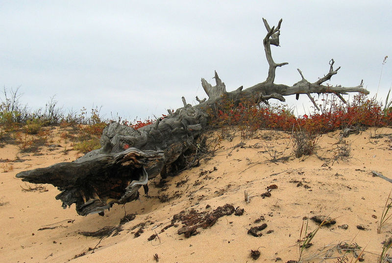 Animal Themes Animals In The Wild Arid Climate Beauty In Nature Day Dead Tree Mammal Nature No People Outdoors Sand Sand Dune Shark Sky Statue Tree