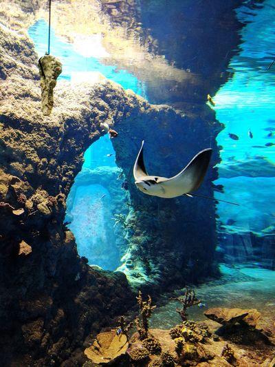 Undersea Skate
