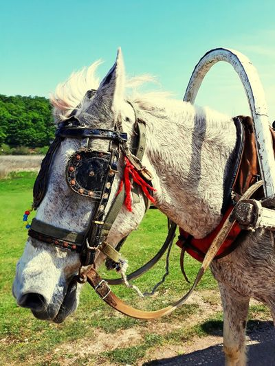 Sky Horse Cart