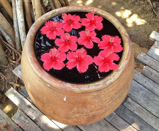 Share Relaxing Beautiful Day Hi!