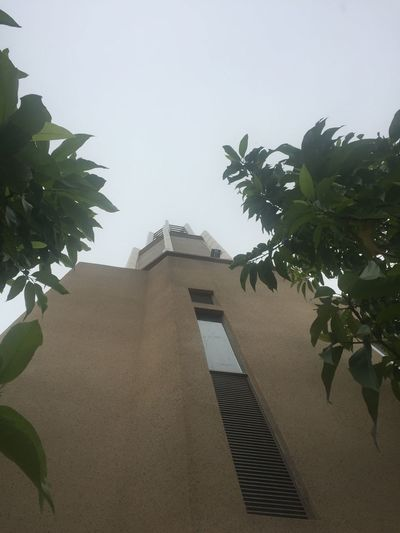 Minarate Building Exterior Built Structure Architecture Growth Low Angle View Clear Sky No People Plant Day Outdoors Palm Tree Leaf Tree Nature Steps And Staircases Sky