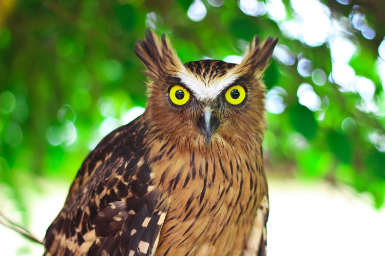 Close-up portrait of owl on tree