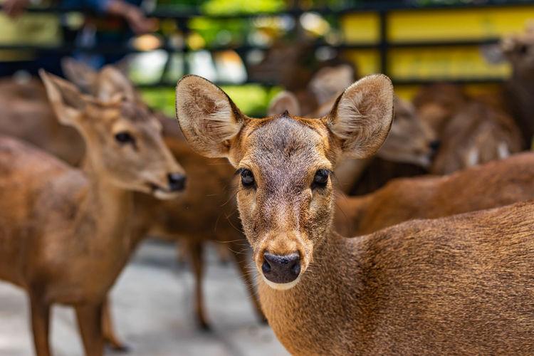 Herd of deer in