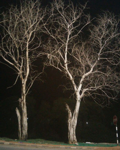 Night Photography Night View Nightlife Skeletons Stems Are Pretty Too Tree Branches Tree Trunk Trees And Sky