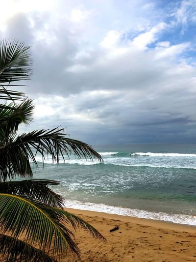 Surf Waves Rolling In Waves Crashing Waves, Ocean, Nature Wave Palm Trees Palm Tree Palm Beauty Beach Photography Beachphotography Beauty In Nature Tranquil Scene