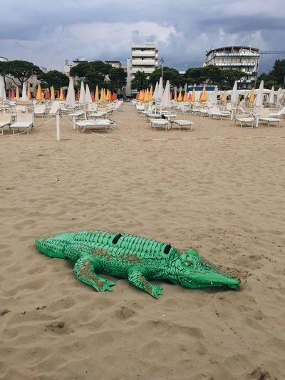 Sand Beach Animal Themes Outdoors Sea No People EyeEmNewHere