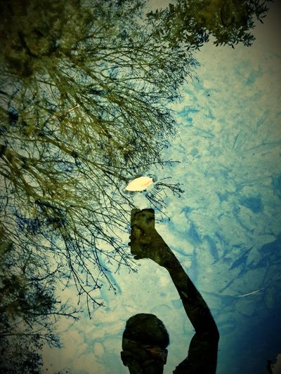 Water Tree Nature Reflection One Person Growth Lifestyles Leisure Activity Sky Day Outdoors Swimming Real People Beauty In Nature Underwater UnderSea People Nature EyeEmNewHere Landscape Beauty In Nature Eyem4phptography Finding New Frontiers Adapted To The City Mobile Conversations