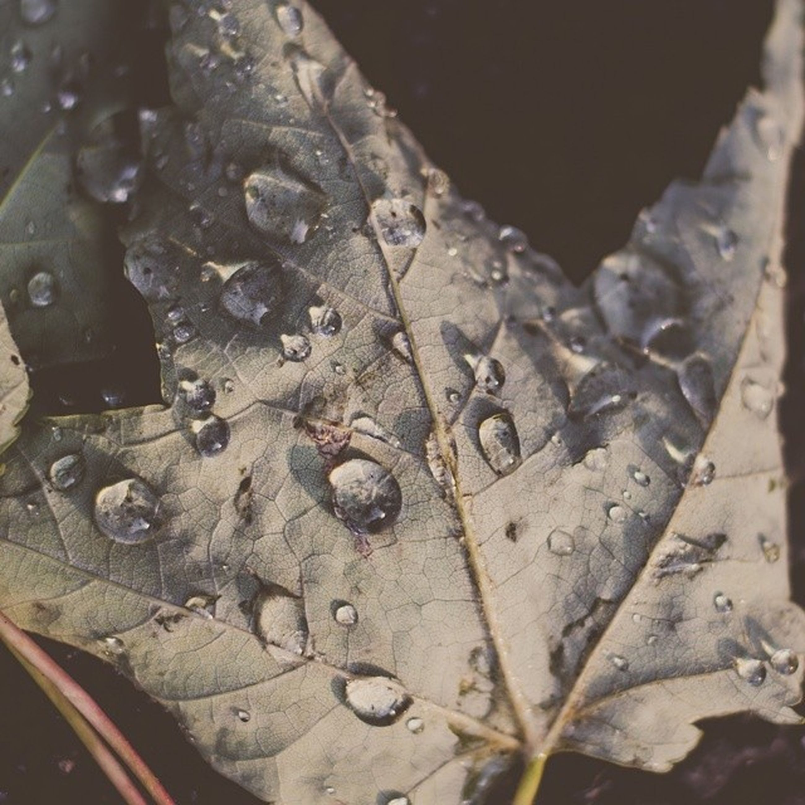 close-up, drop, wet, water, focus on foreground, leaf, nature, season, high angle view, weather, selective focus, wood - material, outdoors, no people, day, detail, rain, textured, pattern, fragility