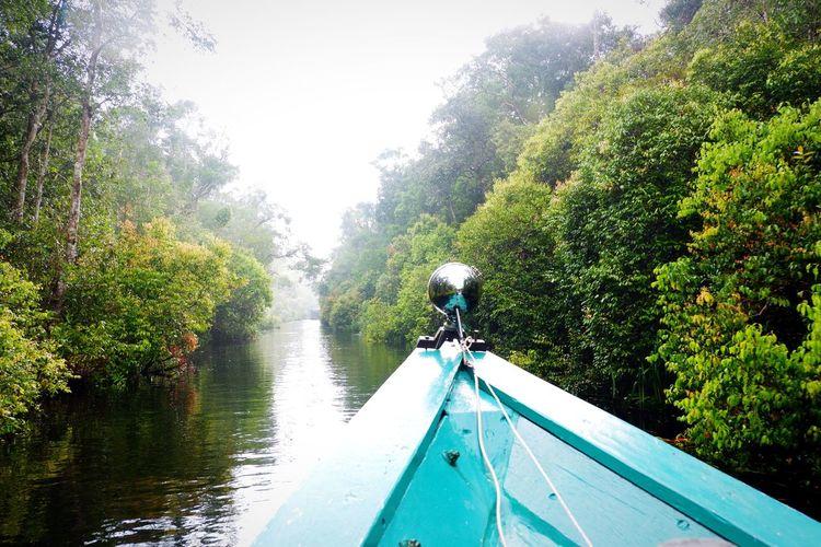 Sekonyer River Tanjungputing National Park Borneo Central Kalimantan Pesonaindonesia Visittanjungputing Nature Green Color Adventure Travel Traveling