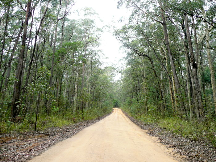 Australian Bush Beauty In Nature Forrest Landscape Nature The Way Forward Track To Beach