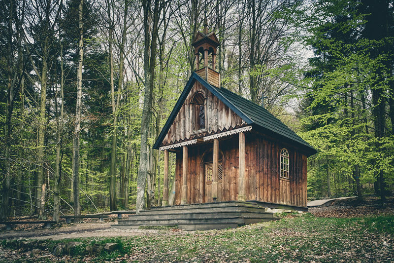 Saint Francis wooden shrine in a forest Architecture Building Exterior Built Structure Day Forest Nature No People Outdoors Tree Wood - Material