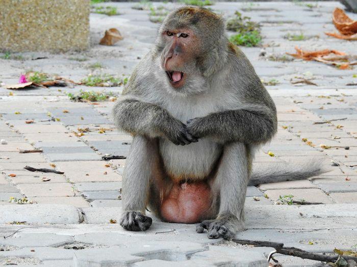 Close-up of monkey sitting on ground