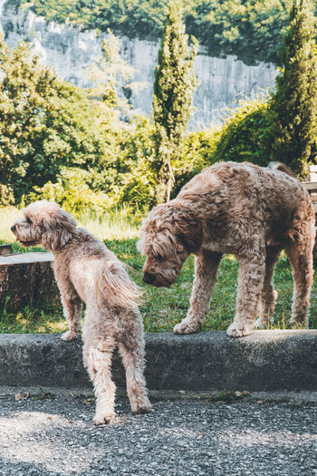 View of two dogs standing against trees
