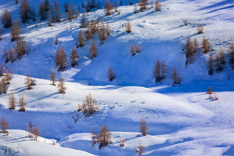 Scenic view of snow covered field and trees