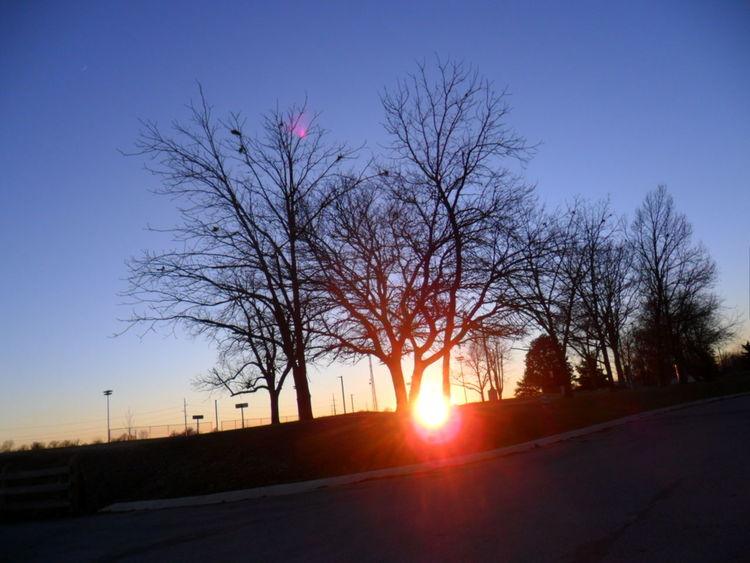 Atmosphere Atmospheric Mood Back Lit Bare Tree Blindshot Dusk Lens Flare Light Majestic Orange Color Outdoors Scenics Silhouette Sky Sun Sunbeam Sunset The Way Forward Tranquil Scene Tranquility Tree