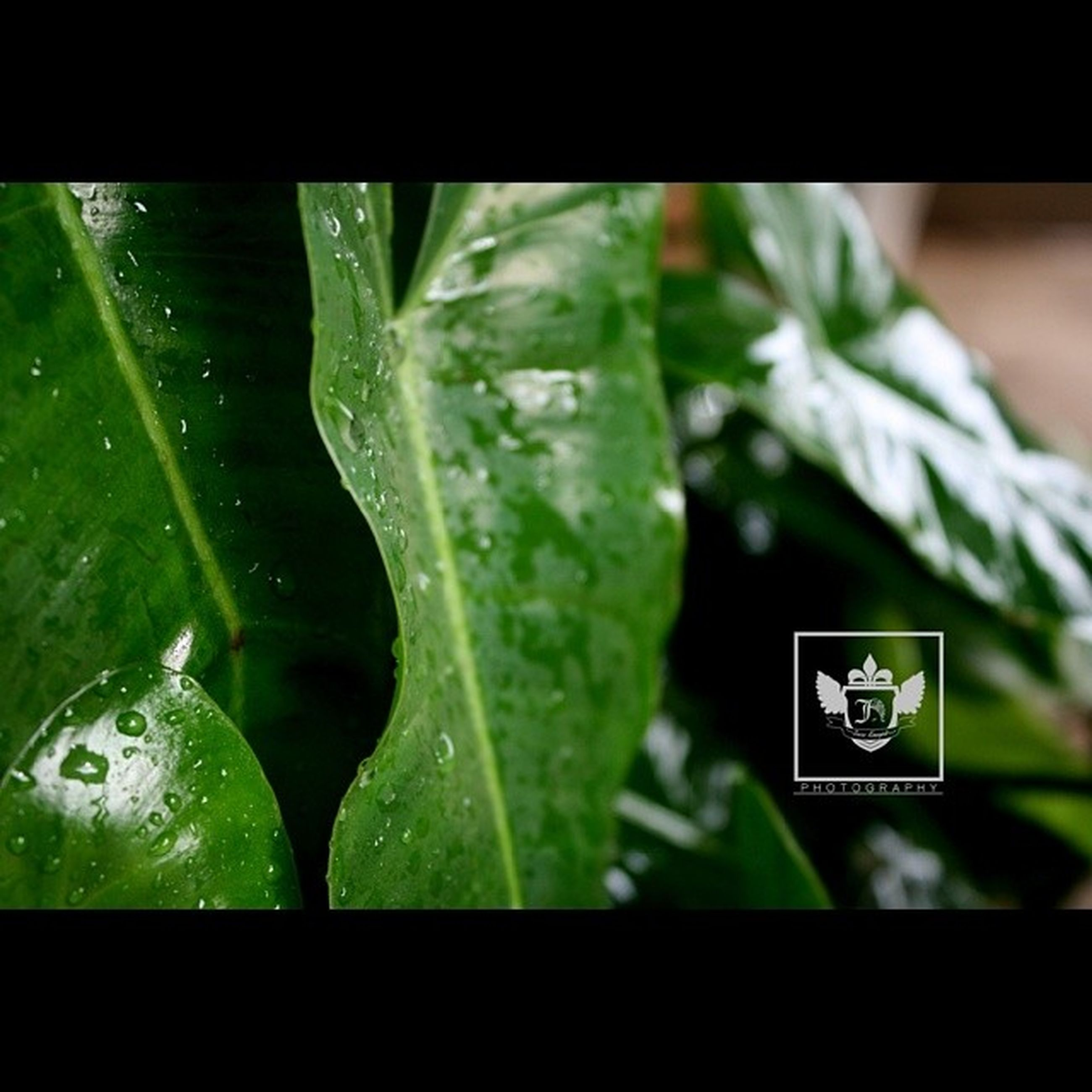 green color, indoors, close-up, leaf, focus on foreground, selective focus, green, drop, hanging, still life, day, no people, plant, table, part of, detail, high angle view, auto post production filter, growth, wet