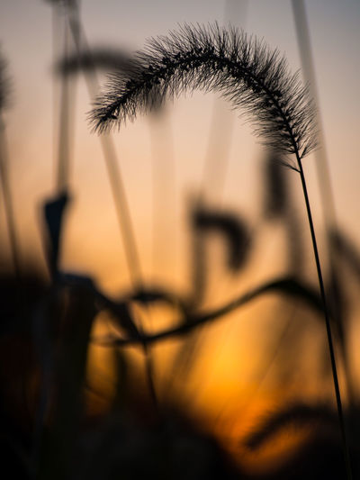Close-up of flower against sky at sunset