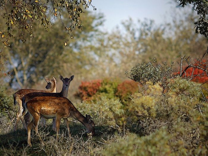 Cartoon deer Cartoon Deer Plant Nature Growth Tree Day No People Animal Wildlife Animals In The Wild Beauty In Nature Outdoors