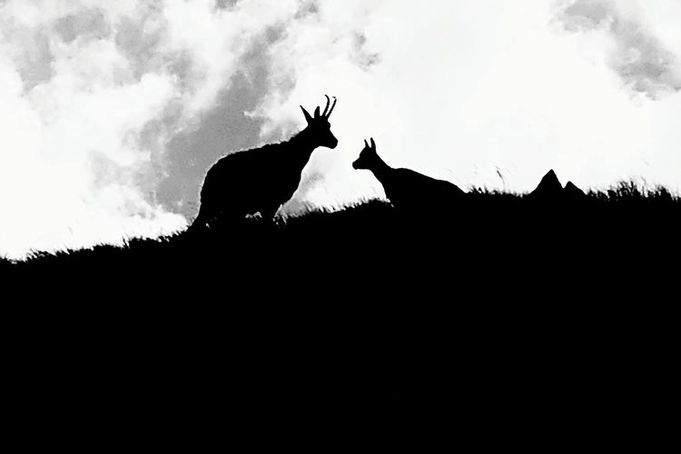 Animal Silhouette Animal Wildlife Animals In The Wild No People Outdoors Beauty In Nature Landscape Stag Nature Animal Photography Mountainside Mountain Landscape Mountain Hiking Mountains Wildlife Wildlife Photography Wild Nature