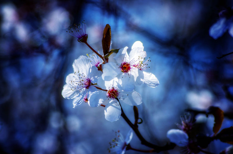 EyeEm Best Shots EyeEm Nature Lover EyeEmBestPics EyeEm Best Shots - Nature Beauty In Nature Wonders Of Nature Flower Head Tree Flower Branch Springtime Blossom White Color Twig Close-up Stamen Pollen