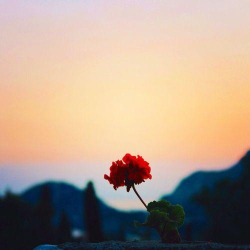 Flower Travel Sunset Summer July 2014