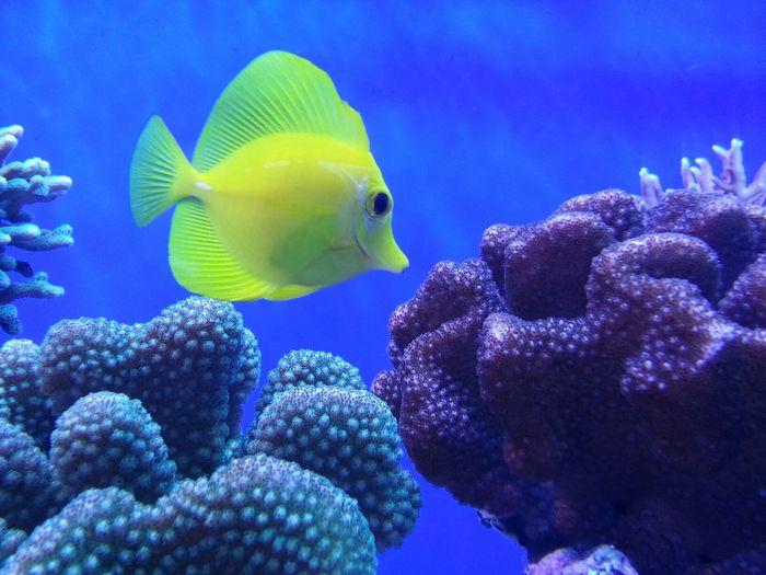 Here fishy fishy ? Fish Aquariumofthepacific Longbeach California