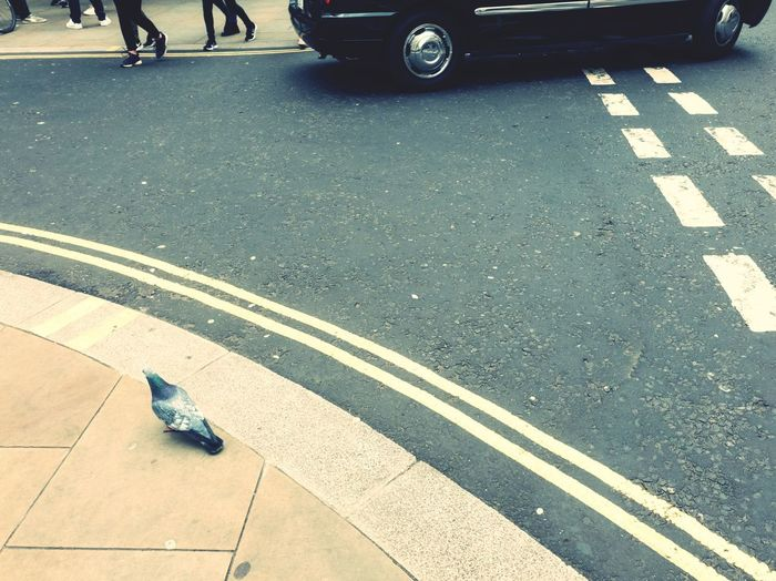 pigeon London