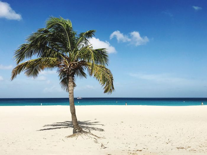 Aruba Caribbean Beach Sea Horizon Over Water Sand Nature Scenics Beauty In Nature Water Palm Tree Tranquil Scene Tranquility Sky Shore Tree Day Growth Outdoors Cloud - Sky No People Blue