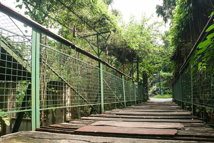 Bridge Day Diminishing Perspective Footpath Green Color Growth Long Lush Foliage Narrow Nature No People Non-urban Scene Outdoors Philippines Scenics Solitude The Way Forward Tranquil Scene Tranquility Tree Walkway