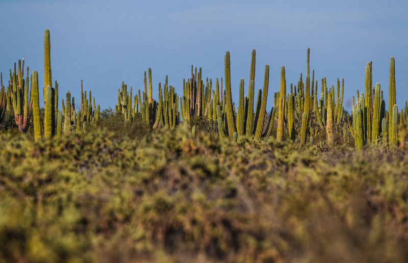 Close-up of plants on field against sky