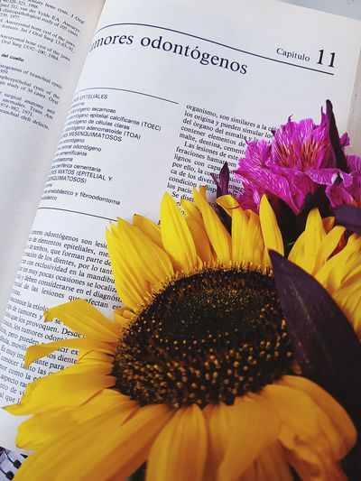 studying for love Studying éxito Inlove Tumor LearningEveryday Flower Head Flower Yellow Petal Close-up Sunflower Pollen Plant Life EyeEmNewHere