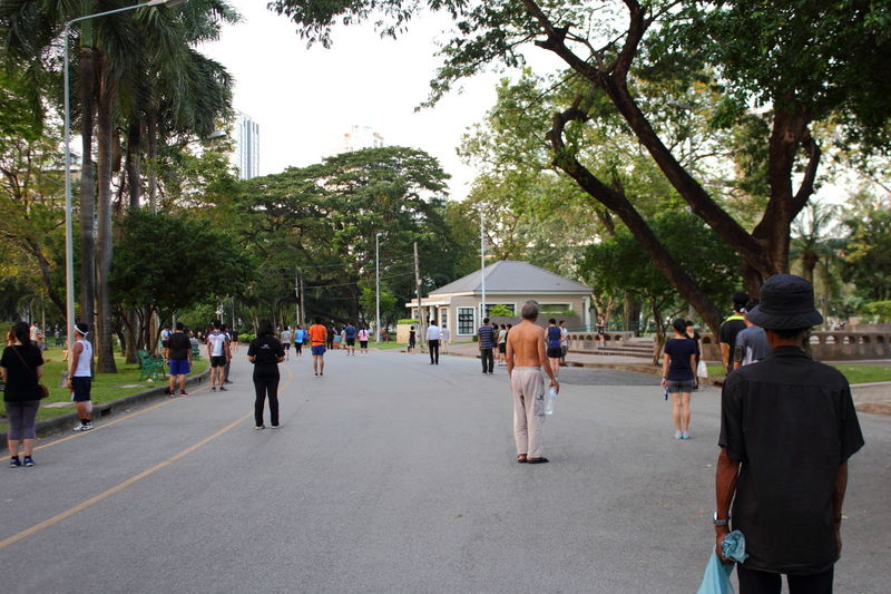 People walking on road along trees